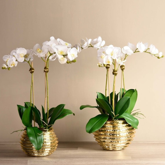 Luxury Silk Faux White Orchid Flower Arrangement With Gold Etsy