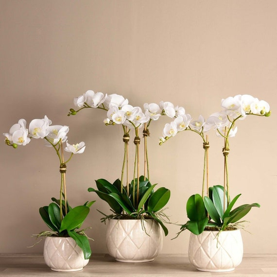Stella Silk Faux White Orchid Flower Arrangement With Ceramic Etsy