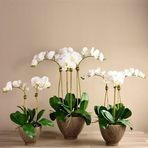 Tall Silk Artificial White Orchid Flower Arrangement With Etsy