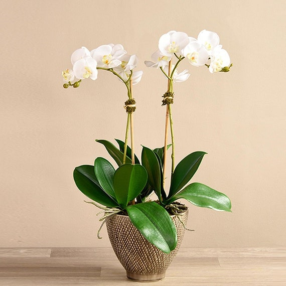 Tall Silk Artificial White Orchid Flower Succulent Plant Etsy