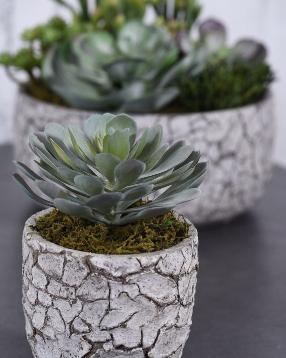 Mini Potted Succulent| Faux Plants for Decorating | Artificial Succulents |  Desert Decor | Faux Plant Decor| fake office plants