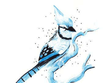 Blue jay illustration art print for your home