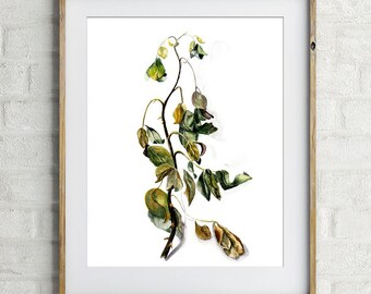 Dried Rose flower art  BOTANICAL ARTWORK PRINT Realistic watercolor painting  leaves wildflower decor drawing branch dried