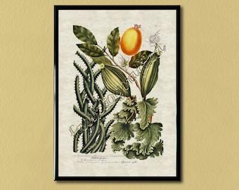 Oude Botanische Prenten : Fruit prenten antiek etsy