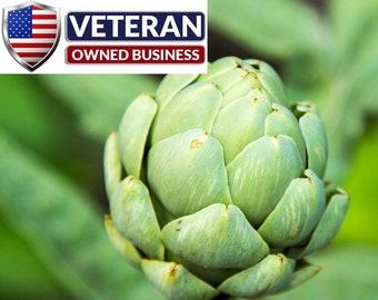 Artichoke seeds green globe 50+ seeds Non-GMO and Heirloom Vegetable seeds