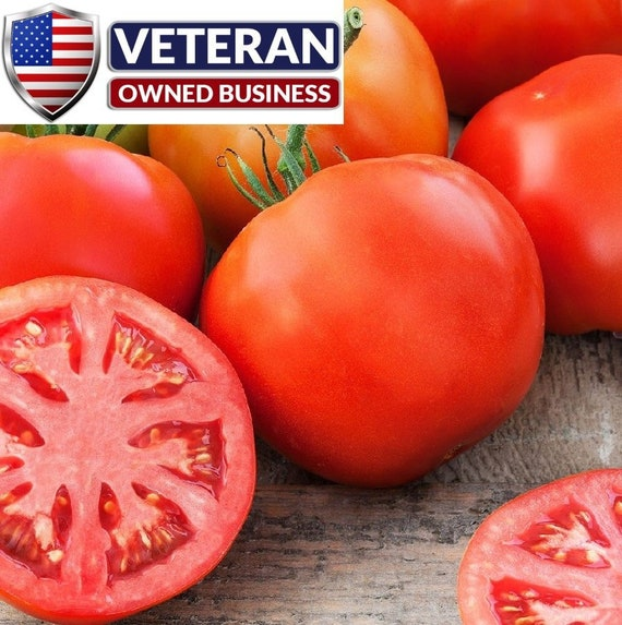 Tomato Seed Beefsteak Tomato Seeds  Fresh Seed   FREE Shipping