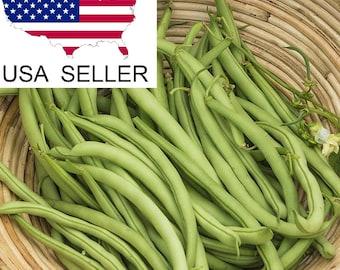 """Heirloom Green bean seed, 30+ seeds, """"contender"""""""