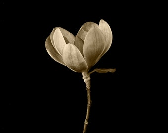 Photography Fine Art Botanical Wall Art Sepia Tone Black and White Graphic