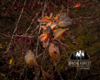 Delicious Leaves by ApacheForest / Nature Photography / Flower / Leaves / Low Vibrance / Fine Art Photography