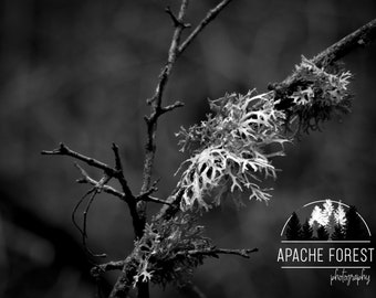 Lace From Nature by ApacheForest / Nature Photography / Flower / Lichen / Low Vibrance / Black & White / Fine Art Photography