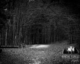 Dark Woods by ApacheForest / Nature Photography / Forest / Balck & Whte / Low Vibrance / Dark / Fine Art Photography