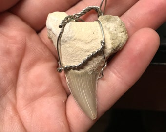 Shark Tooth Pendant for necklace