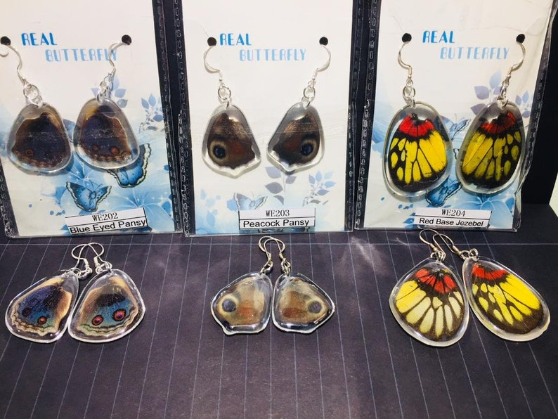 Real Natural Butterfly Wing Earrings encased in Acrylic9.25 Silver Hooks