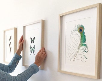 Illustrations on the theme of butterflies and feathers, curiosities cabinet art