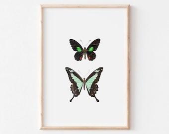 Naturalistic illustration of butterflies, cabinet art of curiosities