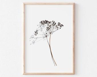 Botanical illustration of dried herb, minimalist decoration