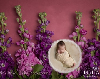 Pink Row - digital background for newborn photographer, digital backdrop, real flowers