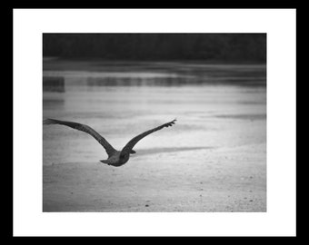Pelican in Flight - 2 Size Digital Download, Nature Photography, Beach Vibes, Printable Wall Art, Poster