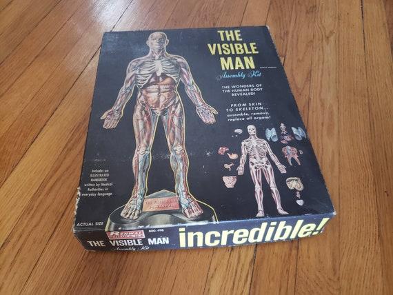 1950s The Visible Man Incredible Anatomical Model Etsy