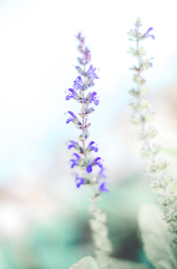 Sage Flowers Printable Fine Art Photo Garden Digital Wallpaper Download Purple Flora Wall Art Meditate Simple Floral Printable Photography