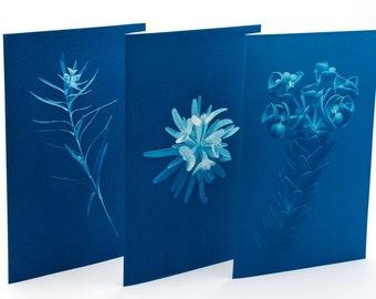 Botanical Greeting Cards - set n.1