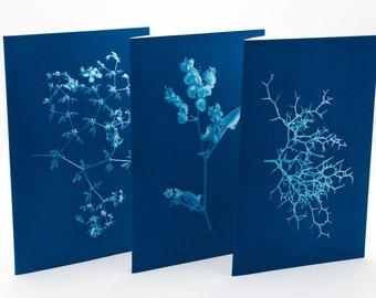 Botanical Greeting Cards - set n.2