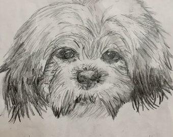 Custom Pet Portrait Drawing, Hand Drawn Pencil Sketches, Pet Portrait Illustration