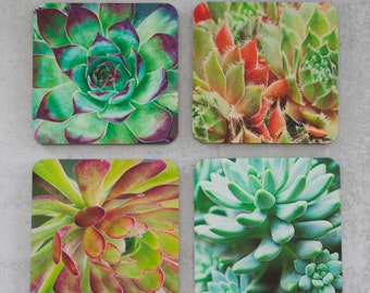 Succulents Photography Coasters - The Modern Angle - Set of Coasters