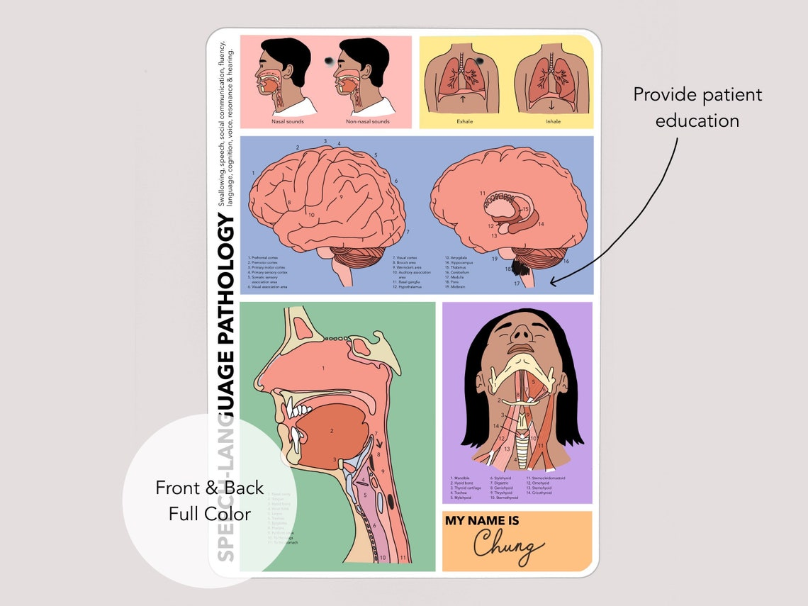Speech Therapy Reference Clipboard Illustrated medical SLP image 1