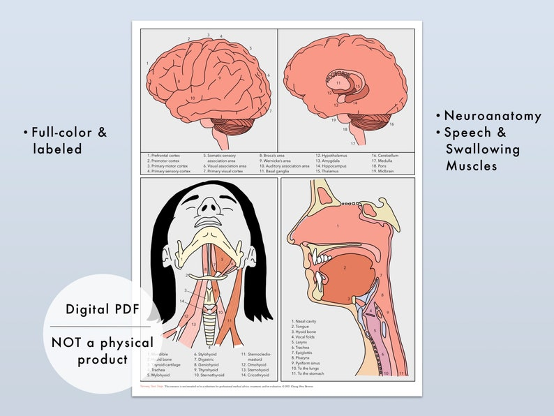 Medical SLP Reference Chart Instant Download Adult Speech image 5