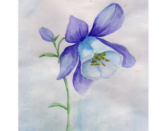 Watercolor drawing Bellflower