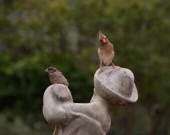 Curious Birds Home Decor, Mugs, Postcards