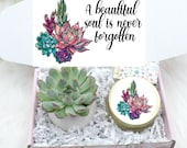 Sympathy Gift - Live Succulent Gift Box - Sorry For Your Loss - A Beautiful Soul Is Never Forgotten - FREE SHIPPING - Natural Succulents
