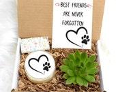 Pet Sympathy Gift - Pet Loss Gift - Custom Pet Sympathy Gift - Pet Memorial - Sympathy gift box - sorry gift box - live succulent Gift Box
