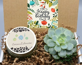 Happy Birthday Gift Box Live Succulent For Her Best Friend Friendship Mom Gifts