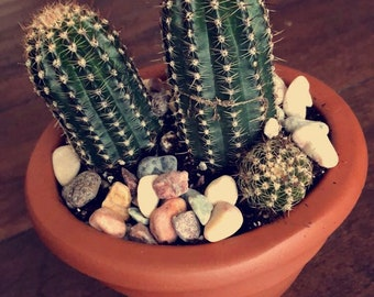 Cactus with Natural Stones