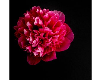 Blooms on Black - Peony 1