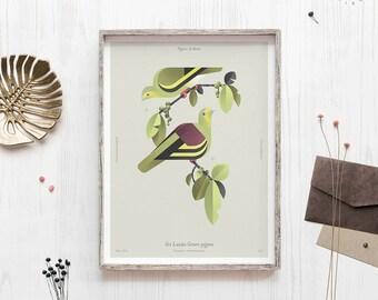 Tropical bird illustration, Sri Lanka Green Pigeon, Science print, Geometric minimal, Bird lover gift, Biology art, Bird wall hanging