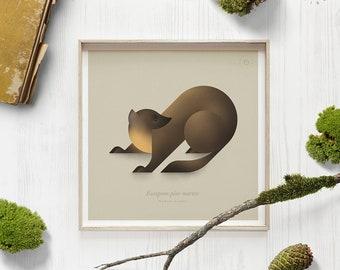 Pine marten, Marten print, Zoology art, Animal poster, Woodland animals, Forest wildlife, Natural history