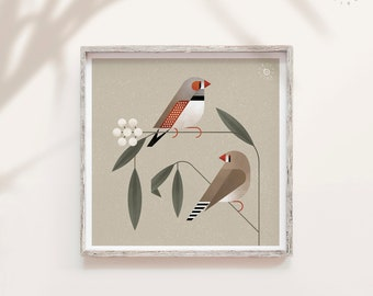 Zebra Finch, Australia bird print, Finches, Garden bird print, Nature lover gift, Natural history art, Songbird decor, Geometric minimal
