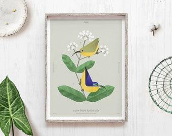 Original bird art, Yellow bellied Sunbird asity, Madagascar print, Tropical bird, Geometric minimal, Bird lover gift, Biology art, Rare bird