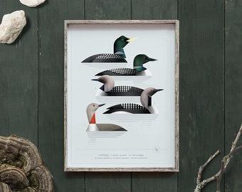 Loons, Divers, Bird family plate, Gaviidae, Species guide, Nature print, Waterbirds art, Geometric animals, Bird gift, Natural history