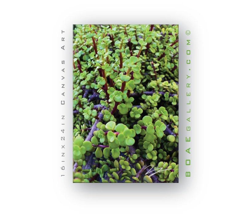 Desert Plant Framed & Canvas Wall Art  Photo reflects Beauty image 0