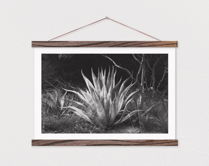 Black and White Aloe Canvas Print with Wood Frame Rails