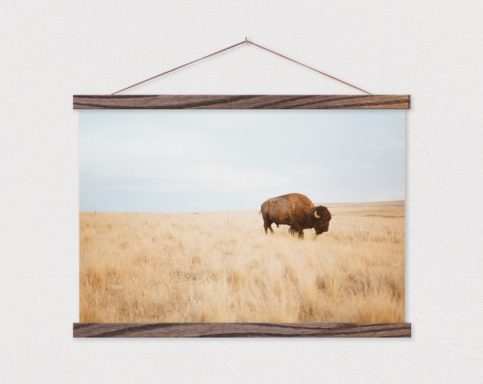 Lone Buffalo Canvas Print with Wood Magnetic Poster Hanger