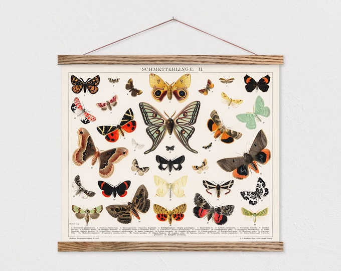 Vintage Butterflies Canvas with Hanger Frames ART