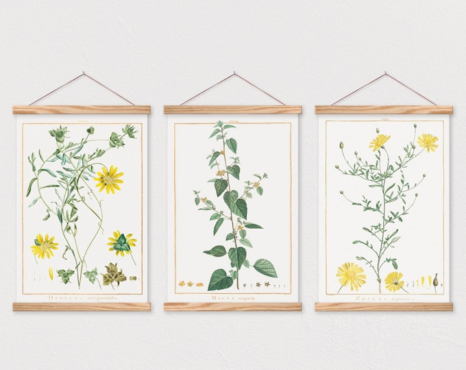 Set of 3 Yellow Flower Botanical Prints Set on Canvas with Magnetic Hanger Frame