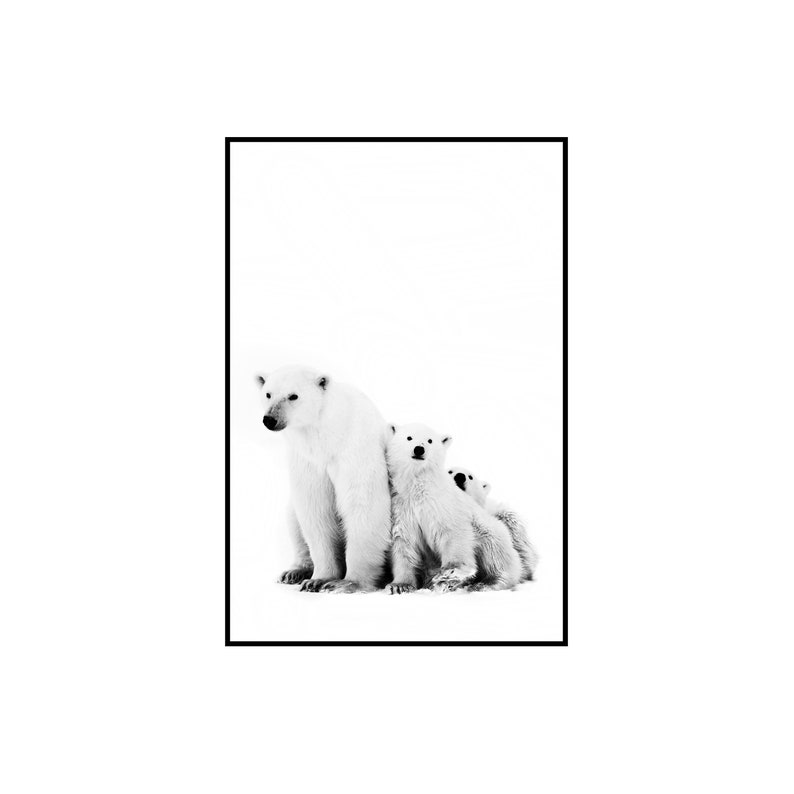 picture about Printable Polar Bear Pictures identified as Little one Undergo Print Go through Print Polar Endure Poster Endure Printable Wall Artwork Electronic Obtain Polar Undertake Print Undertake Child Black White Print Bears Artwork