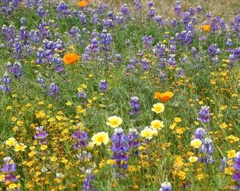 California Native Wildflower Mix Seed Bark