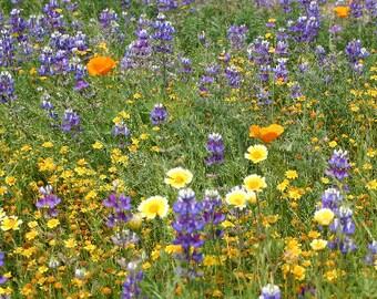 California Native Wildflower Mix Seedbark *CRUMBLES*